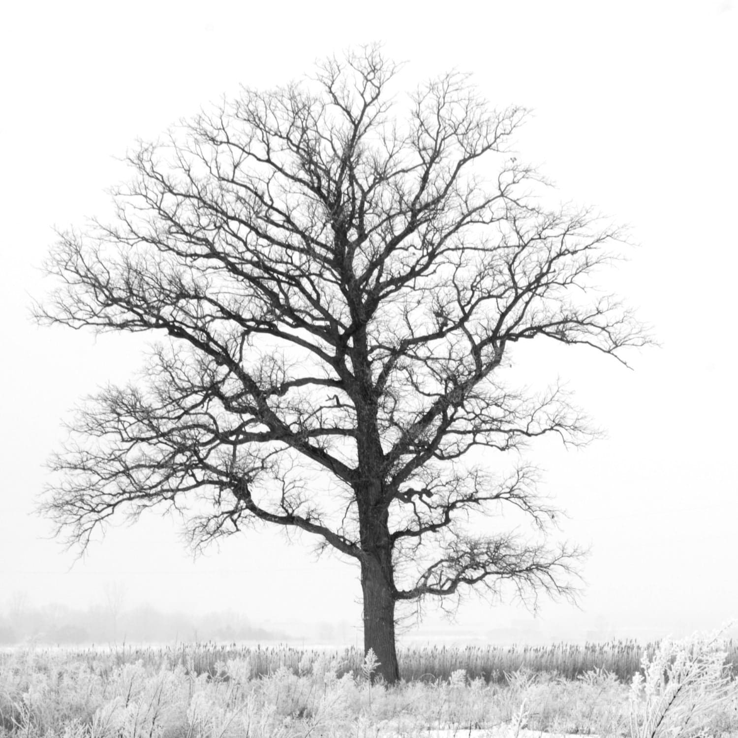 Black And White Nature Prints x black and white tree print
