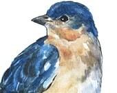 Bluebird (print)