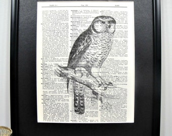 FRAMED Vintage Dictionary Print - Woodland Series - The Perched Owl