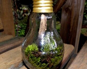 Light bulb Terrarium wild and free-Woodland Moss-Forest Fresh moss-Green light here all the way.