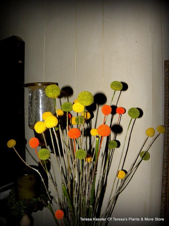 Orange Craspedia-Billy Balls-Billy Buttons-Orange Wedding Flowers-Bundle of 40