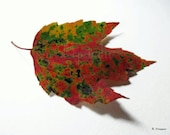 Autumn Leaf photograph fine art 8x10 print nature woodland rustic home decor