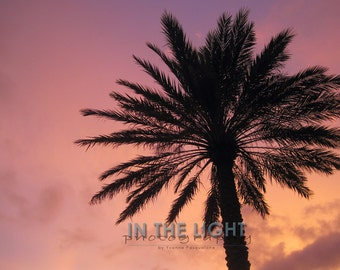 READY To SHIP - Palm Tree Sunset 2 - Sarasota FL - Fine Art Photograpy - 8x10, 11x14, other sizes available - fPOE