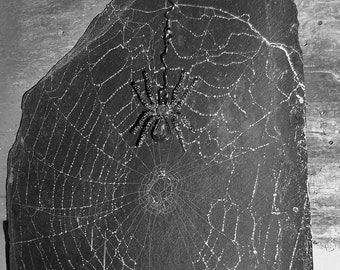 Halloween REAL  Spider Web Imprint