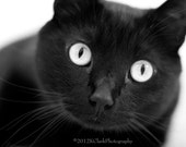 Photography black and white Halloween Cat Kitten Kitty Home Decor Dramatic Eye contact Silver gaze