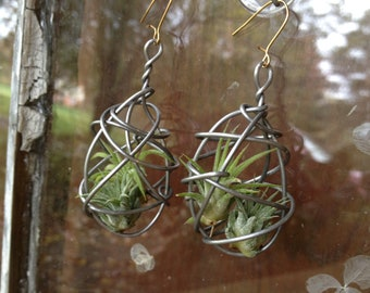 NEW DESIGN Pair of Living Air Plant Earrings
