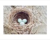 Bird Nest Photo Print -  Wren Nest - Nature - Spring