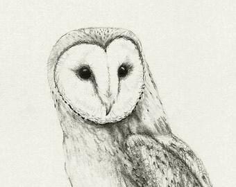 Barn Owl Drawing Print