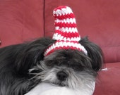 CAT in the HAT - Dog or cat hat - Humorous - 2 to 20 lb pets- made to order