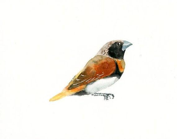 Chestnut-breasted MANNIKIN Original watercolor painting 10x8inch