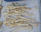 Cleaned Coyote Ulna Bones- Leg Bones - Real Bones- 4 Assorted Pieces