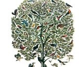 "Vintage Feather Print ""Tree of Birds"" Natural History Antique Illustration - Bird Still Life Curiosity Woodland"