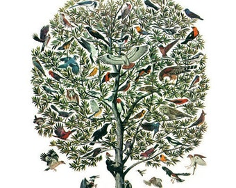 "Vintage Feather Print ""Tree of Birds"" Natural History Antique Illustration - Bird Still Life Curiosity Woodland"