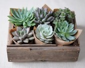 Succulent Centerpiece, Rustic, Great For Weddings, Cocktail Parties And Other Special Events, Housewarming Gift - SucculentsGalore