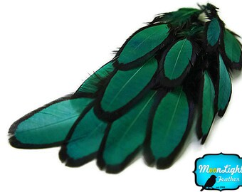 Custom Dye Feather, 1 Dozen - PEACOCK GREEN Laced Hen Saddle Loose Feather : 1406