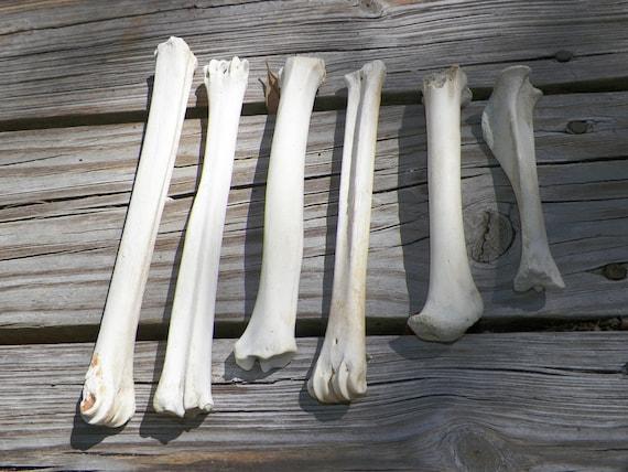 Found Bone Lot - 6 Leg Bones - Deer - Taxidermy - Natural History - Art / Craft / Jewelry Supplies - Cruelty Free