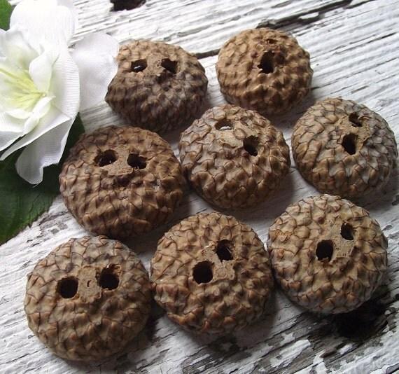 Acorn Cap Buttons (Qty. 8) - Natural Buttons - 1 inch, 2 holes, For Journals, Pillows, Handbags, Knitting