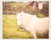 Horse Photograph - whimsical wall decor, girls room decor - Caliope - Ireland photography, wall art, Etsy wall art