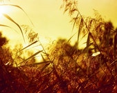 Summer Grass Photography - 5x7