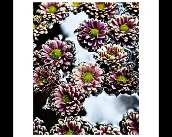 Chrysanthemums 2 8X10 Custom Print