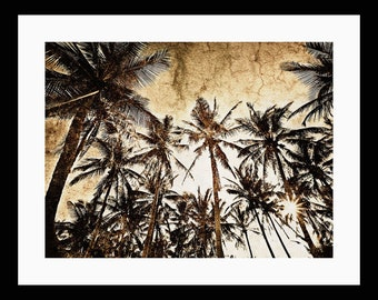 Coconut Palm 12X16 Fine Art  Print