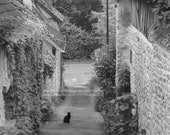 Giverny France alley cat black and white photo