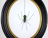 Wee Dangly Czechoslovakian Green Glass Spider Repurposed Art