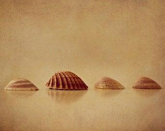 Shells - Beach Art - Beach House Decor - Seashells - Fine Art Photo - 8x12 Photograph - Beige Brown Neutral Decor - Made in Israel