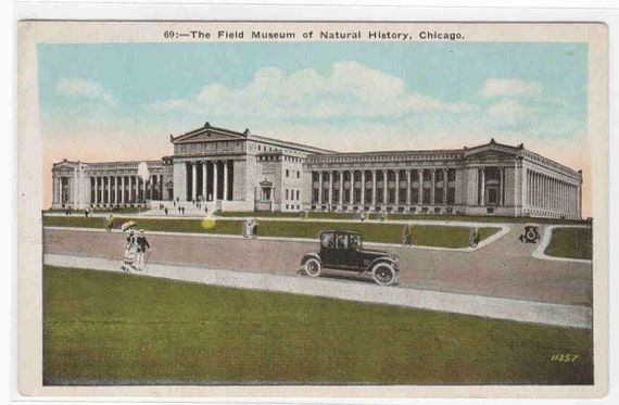 Field Museum Natural HIstory Chicago Illinois postcard
