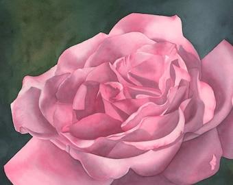 Rose Blush Original Watercolor