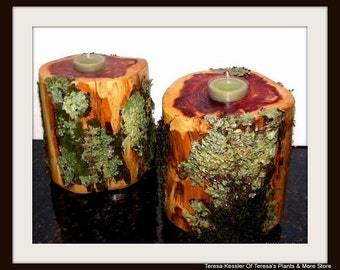 Woodland Wedding Moss and Lichen Covered Cedar log candle holder-Moss and Lichens are attached here-Driftwood Candles