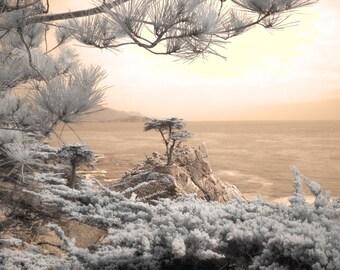 The Lone Cypress, Cypress tree photo, fine art photography, infrared photography, tree photo, home decor photography, home decor photo
