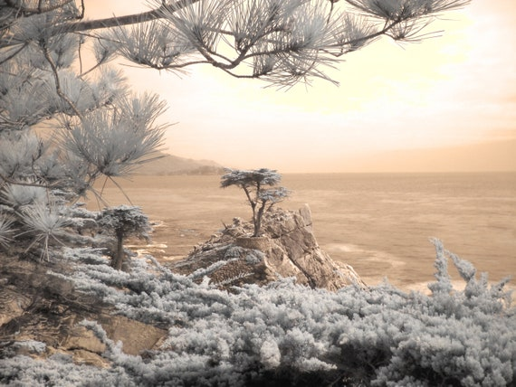 The Lone Cypress, Cypress tree photo, fine art photography, infrared photography, tree photo, home decor photography, home decor photo