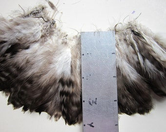 """2"""" strip of Strung Rooster Chinchilla Schlappens Feathers - Natural Grey color - individual feather 4-5"""" long"""