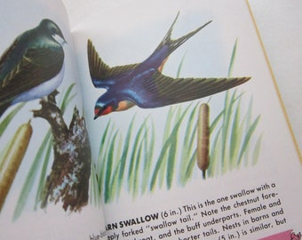 vintage GOLDEN book - BIRDS, A Guide to Field Identification - circa 1987