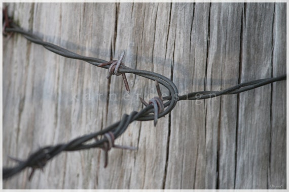 All tied up - Weathered Fence Post and Barb Wire, in Southbury, Connecticut, Metal, rustic decor, wood grey, interior design, country living