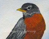 ROBIN print of 5 x 7 giclee bird print