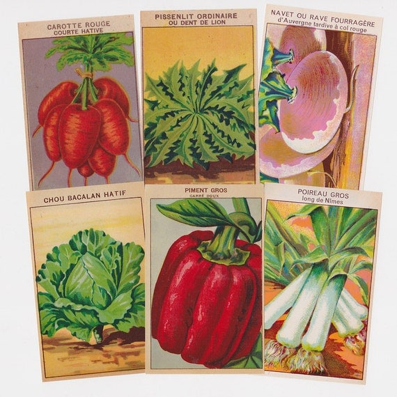 72 Vegetable Packet Labels Vintage French All Different