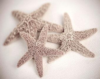 Shabby Chic, Nautical art, nature photography, beach cottage decor,  8 x 10,  original photograph of three starfish