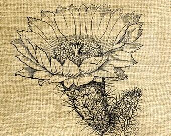 Instant Download - Cactus Flower Vintage Illustration - Download and Print - Image Transfer - Digital Sheet by Room29 - Sheet no. 1028