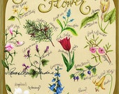 Voice Of A Flower Gliceé Print, Artist Signed, Meanings, Tulip, Cedar, Lily, Violet, Larkspur, Sweet Pea, Nature, Floral