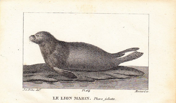 1830  SET of TWO antique SEALS  mini prints by Buffon, sea lion and sea bear, 182 years old nice print
