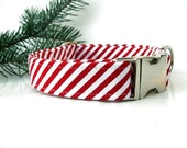 Christmas Dog Collar - Peppermint Stick - Nickel Hardware