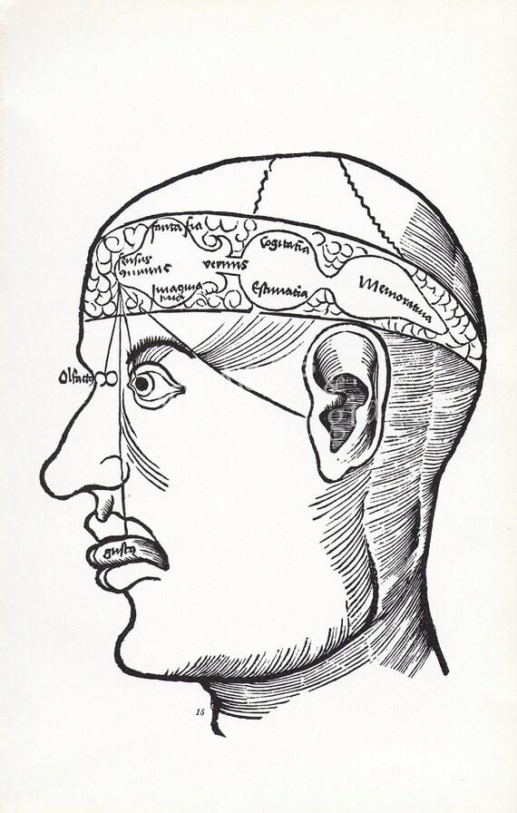 Vintage Phrenology chart Human Head brain engraving psychology medical book plate