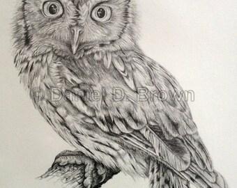 Eastern Screech Owl (Megascops asio), Daniel D. Brown, 2012, Pencil