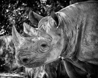 Rhino - Fine Art Photograph 5x7 8x10 11x14 16x20 24x30