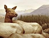 Woodland Deer photograph, Animal Photography, fine art photo print, rural nature landscape, brown animal nursery decor