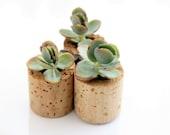 Mini Succulent Cork Magnets, Set of 3