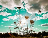 Queen Anne's Lace Sunset - 8x10 Fine Art Flower Print