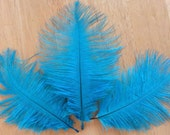 Turquoise Blue Ostrich Feathers - 3 Feathers